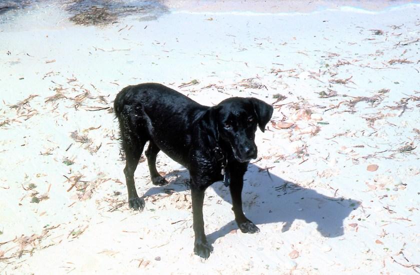 Bahams Humane Society, Condor, dog