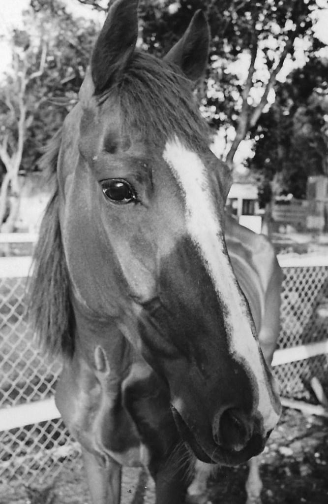 Headshot of Last Hope racehorse
