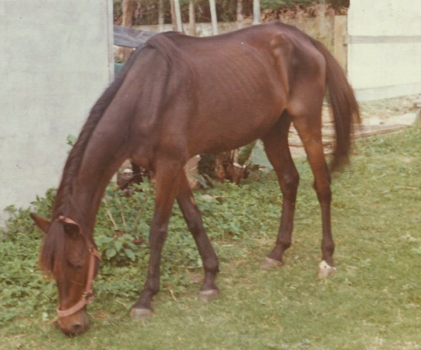 Starving race horse