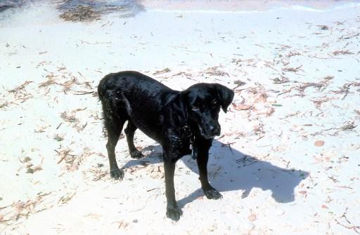 Condor on Paradise island beach