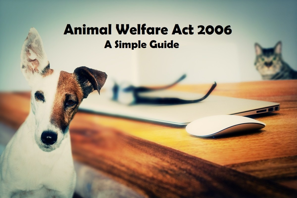 Animal Welfare Act 2006 a simple guide