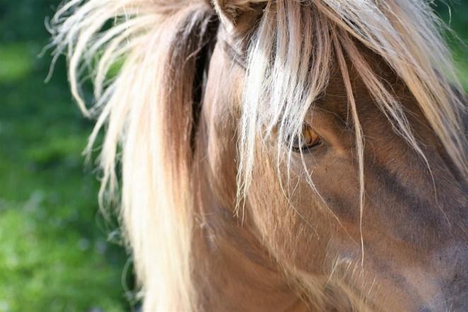 Pip, Mini Horse Profile
