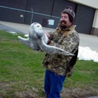 What Eats Snowy Owls? - Snowy Owl Predators