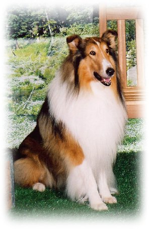 Image result for lassie the dog