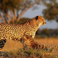 African Animals For Kids | List of 8 African Animals