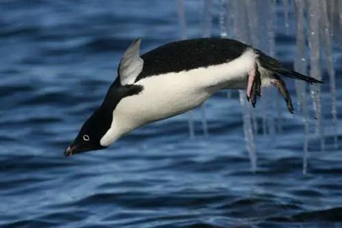 https://i2.wp.com/animalstime.com/wp-content/uploads/2012/12/information-about-penguins2.jpg