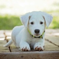 Pet Care While on Vacation: How to Keep a Pet Happy When You're Gone