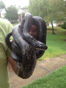 buckhead snake removal