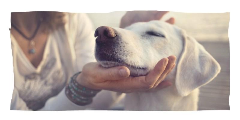 Hund wird gestreichelt