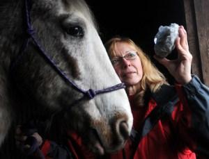 healing horses