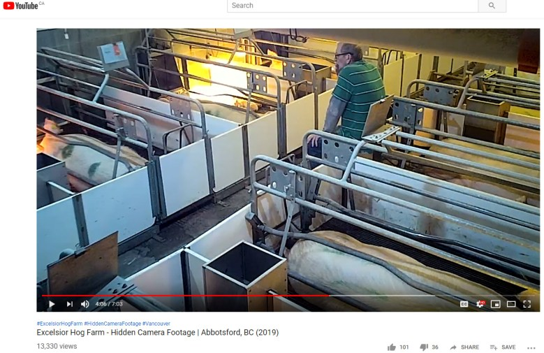 New Hidden Camera Video Footage Shows Farmers Abusing