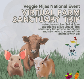 Image of a young pink pig, a brown calf, and a brown and white lamb standing in the grass together. Text reads: Veggie Mijas National Event. Virtual Farm Sanctuary Trip. Saturday October 3rd at 3pm. Experience a live virtual farm sanctuary trip and say hello to some of the animals with us!