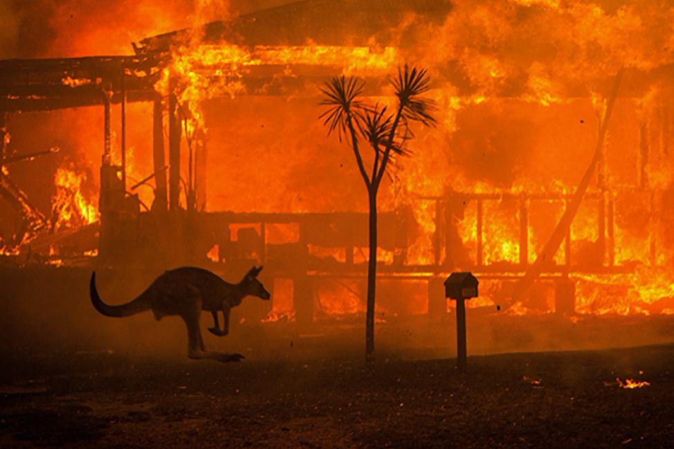 Filmmakers expose shameful kangaroo slaughter
