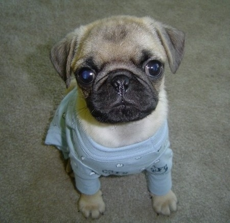 Пижамы для собак