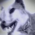 thylacine spook