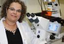 Israel: Universitatea Bar-Ilan dezvoltă o strategie moleculară pentru tratarea cancerului hematologic
