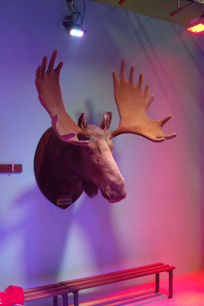 Still from Maynard Wine Gums ad featuring animatronic moose head