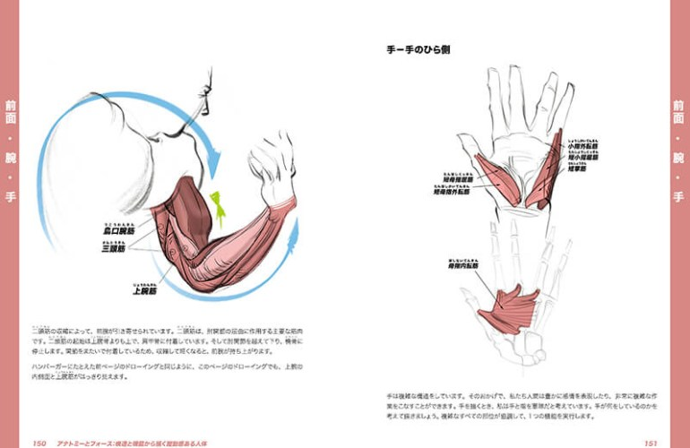 anatomy-force_6