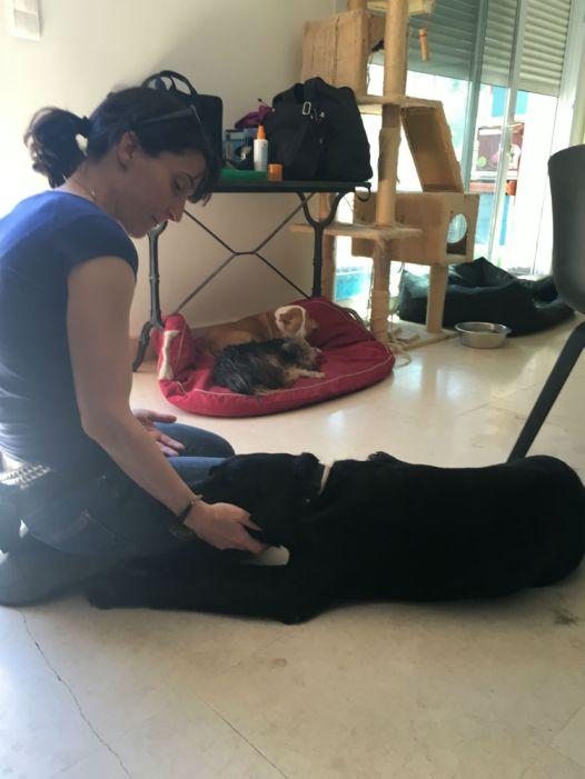 Une petite pause au frais, avec le plus adorable des papys chiens.