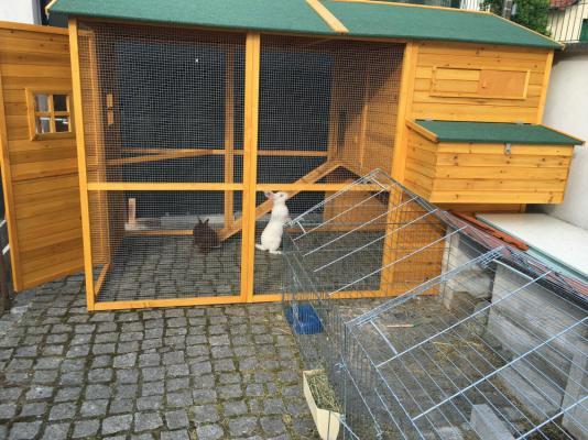 Les lapinous inspectent le poulailler qui va accueillir leurs voisines temporaires.