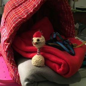 Odile est une bienfaitrice qui n'oublie jamais ses petits protégés. Polaires, niches, jouets, youpiiii ! Merci Odile !