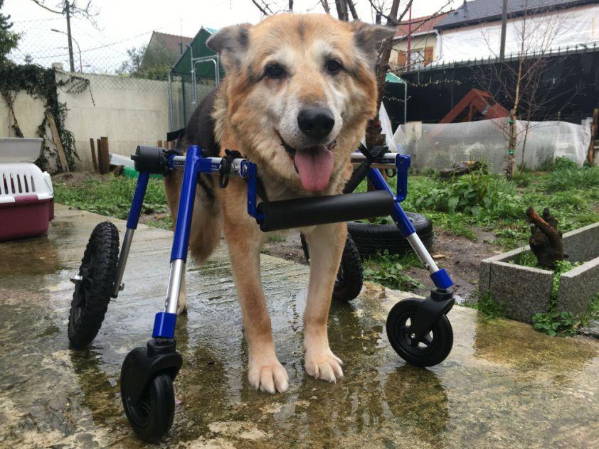 Moumou chariot 4