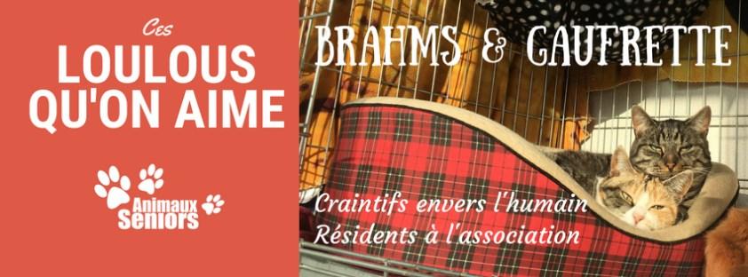 Brahms et Gaufrette.jpg