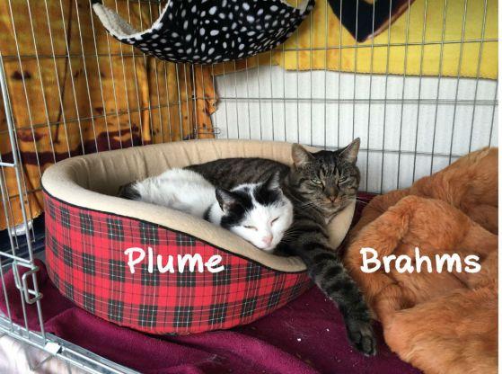 Plume et Brahms c'est une histoire d'amour ! Elle est foldingue de son matou 😻😻😻