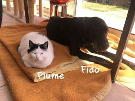 Plume aimait beaucoup notre mascotte Fido.