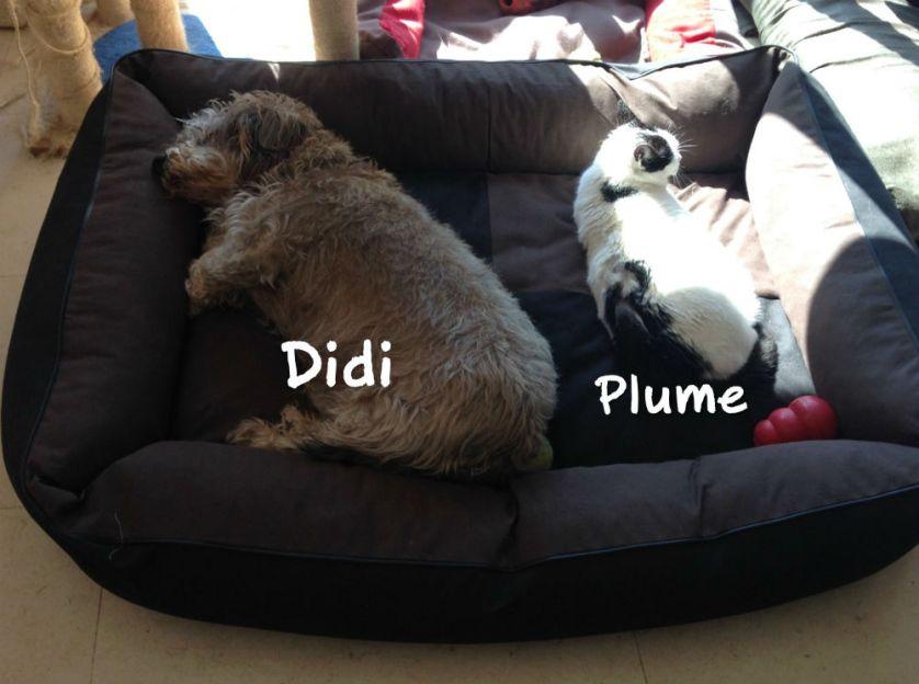 Maintenant que Fido est parti, Plume a ses copains chats, et son fidèle Didi, toujours à ses côtés ❤