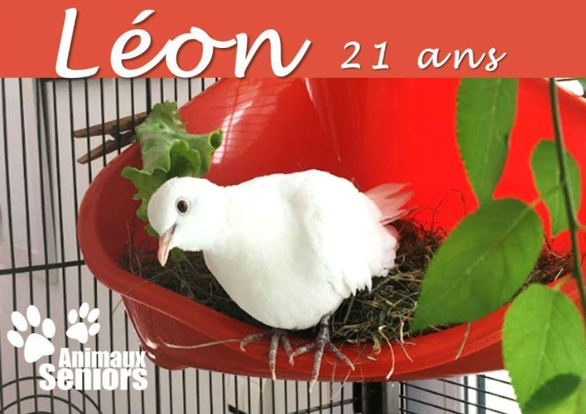 Léon_wp 3