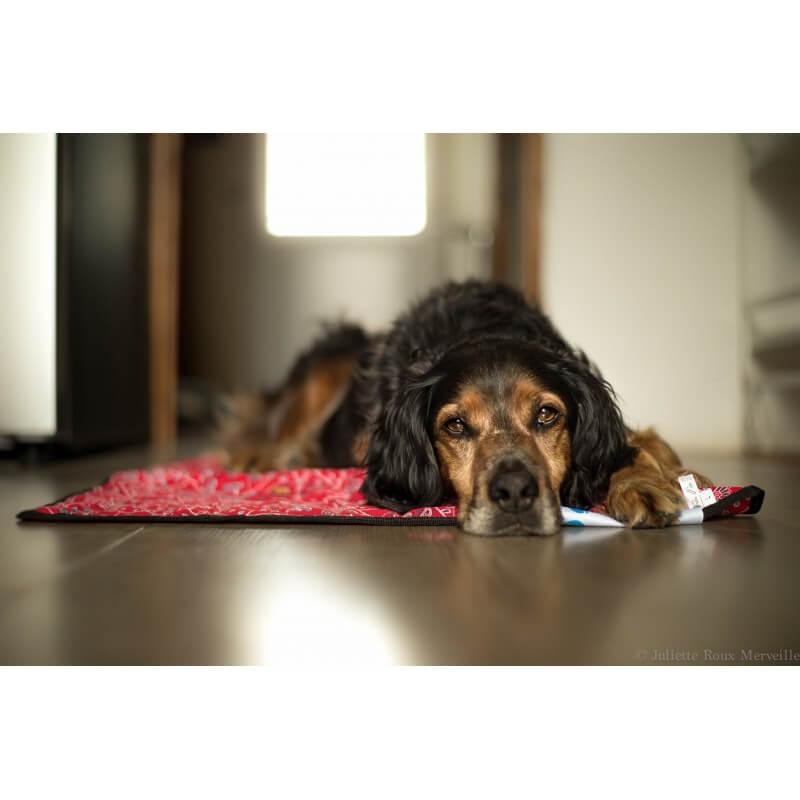 aqua coolkeeper tapis rafraichissant pour chien