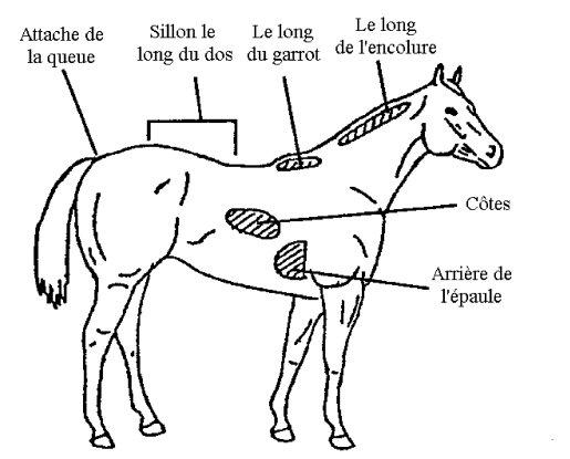 évaluation cheval 1