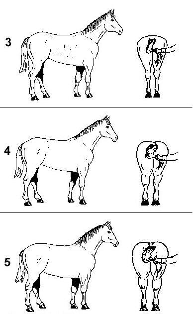 évaluation cheval 2