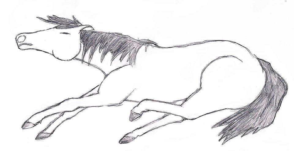 Dessin de cheval - Dessiner facilement un cheval ...