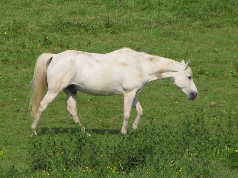 cheval (21)