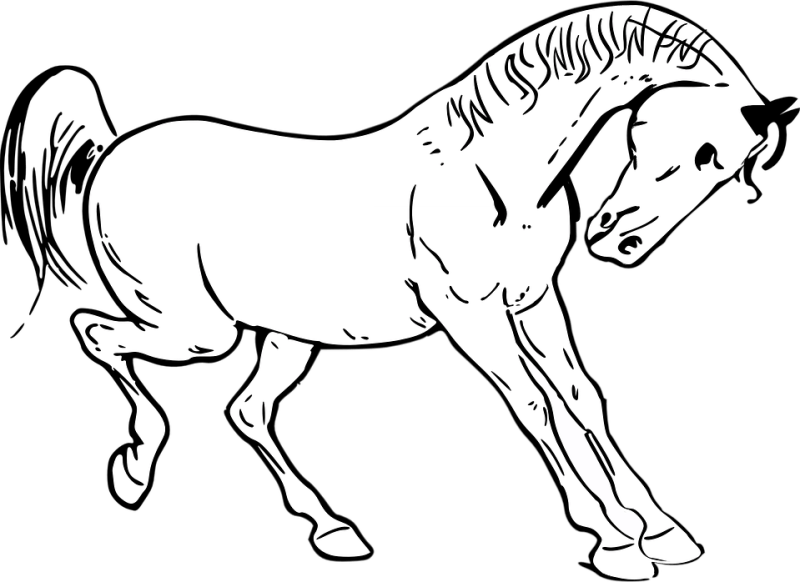 cheval (4)