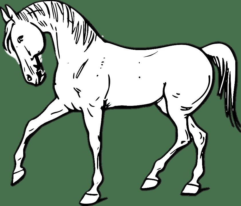 Dessin de cheval - Dessiner un cheval simple ...