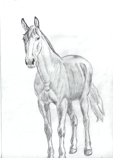 Dessin de cheval - Apprendre a dessiner des chevaux ...