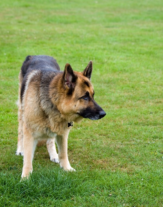 chien (15)