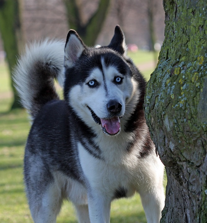 chien (19)
