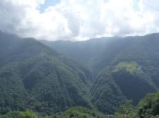 Monte Tamaro Woodland