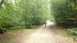 Cycle Epping Forest