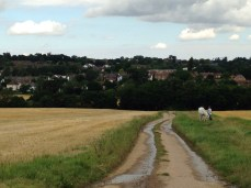 Horse Epping