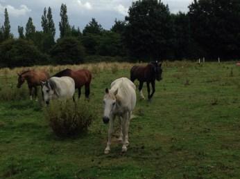Epping Horses