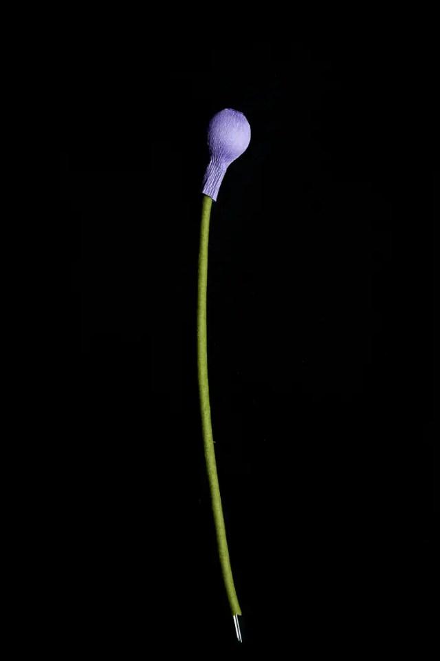 APaperAllium-19