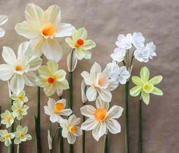 [2020] Paper Daffodil Tutorial