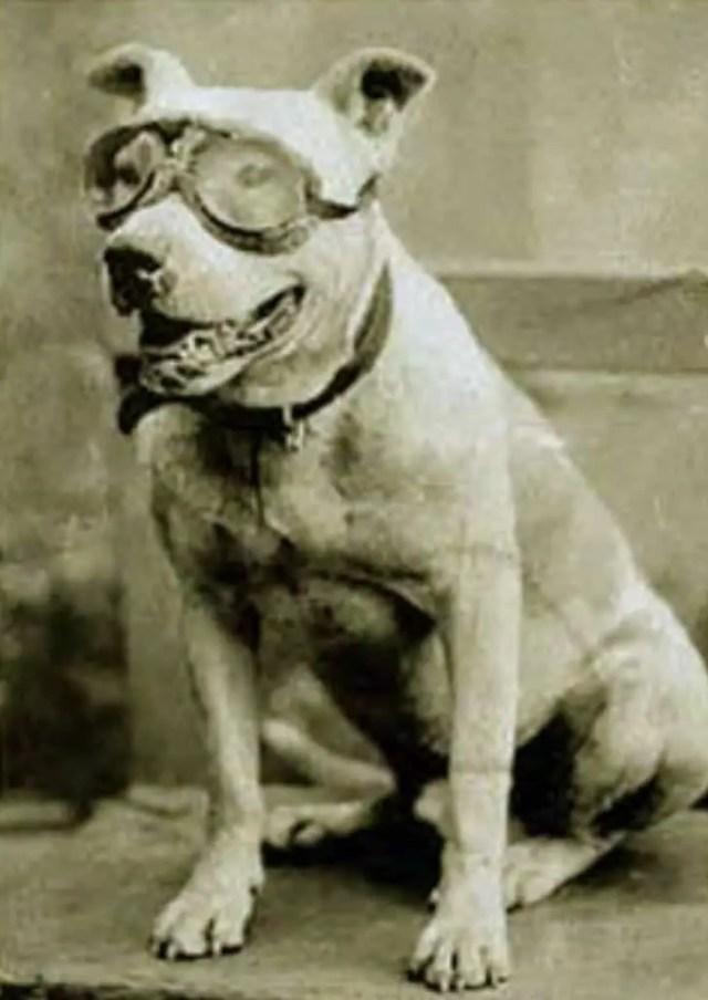 Dr. Horatio Nelson Jackson's dog, Bud