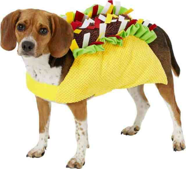 Taco dog Halloween costume for 2019.
