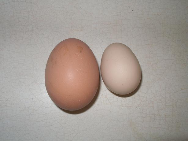 egg scale